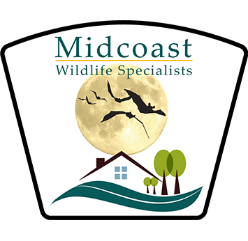 Wildlife Pest Control Web Design built Midcoast Wildlife Specialists website