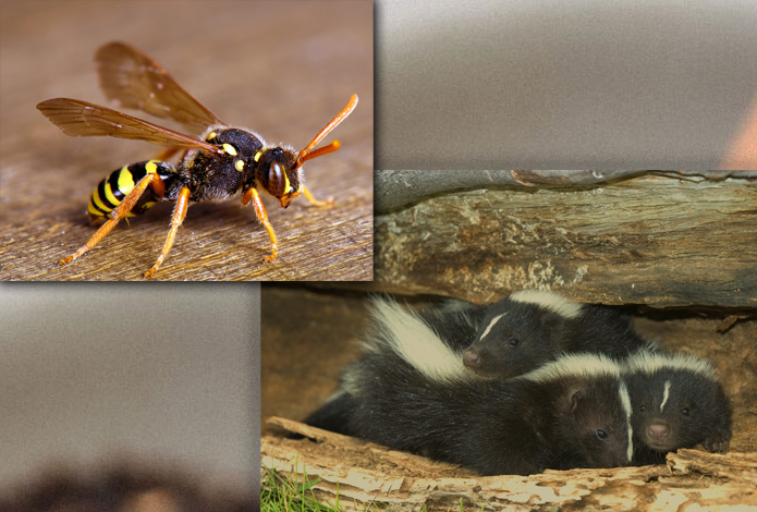 About Wildlife Pest Control Web Design tells you how things are. insect and animal photo.