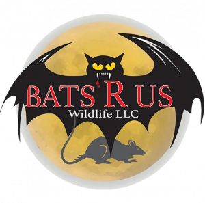 Wildlife Pest Control Web Design built Buckeye Wildlife Solutions Nothwest