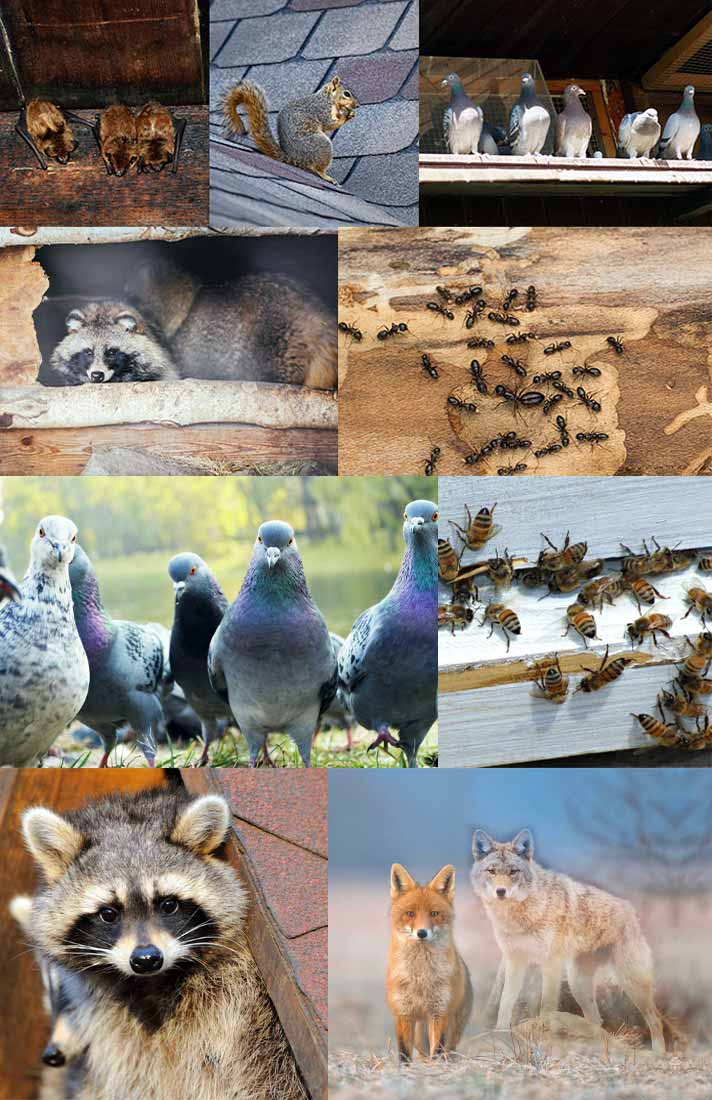 Collage of insects and wildlife at About Wildlife Pest Control Web Design